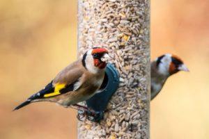 Futterstelle für Gartenvögel im Garten