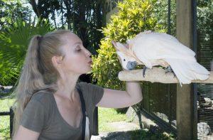 Zahmer Weißhaubenkakadu mit Halterin