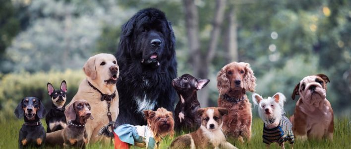 alle-hunderassen