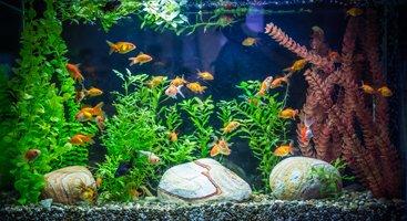 Aquarium Fische Pflanzen