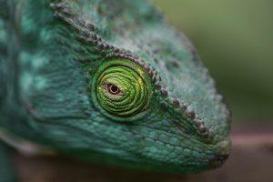 grünes chamäleon mit drachenartigem kopf