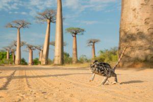 ein chamäleon in einer weitläufigen wüstenlandschaft