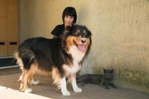 kartäuser chartreux katze hund