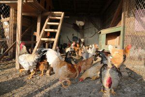 beispiel stall zur hühnerhaltung
