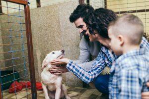 adoption eines hundes durch eine familie in der hundevermittlung