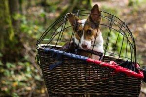 Schutzgitter Hunde-Fahrradkorb