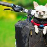 Hundefahrradkorb von Little Moon