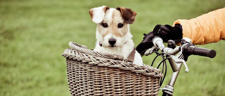 hundefahrradkorb test