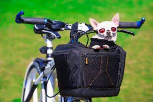 Hundefahrradkorb Vergleich