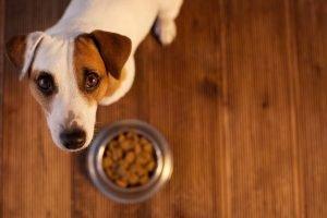 hund mit vollem napf will nicht fressen