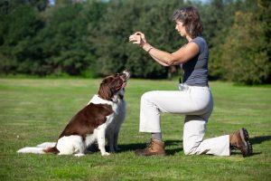 hunde werden von hundetrainerin auf wiese erzogen