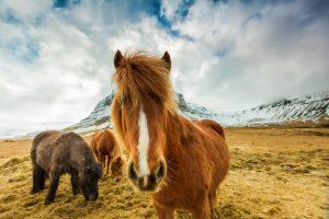 3 isländer in island vor einem schneebedeckten Berg