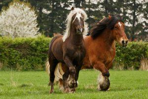 Hengst Stute Wallach starke Pferde Freizeit