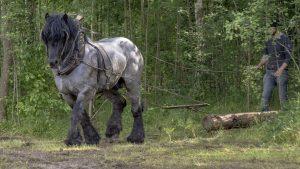Rassen Pferd Geschirr Arbeitspferd