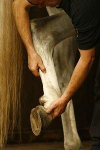 Mauke Pferdekrankheit Vorbeugen
