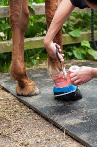Hautkrankheit bestes Mittel gegen Mauken Hausmittel Maukesalbe