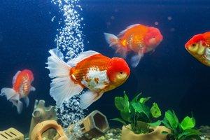 Fische Aquarium Pumpe