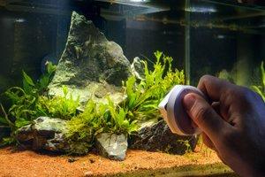 Aquarium Scheiben säubern Magnet