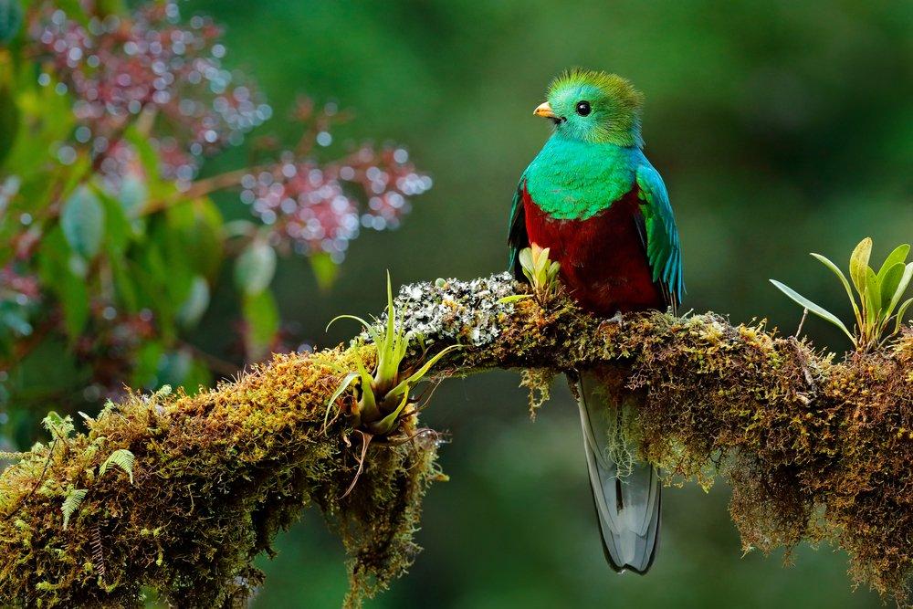 Vogel Grün Rot