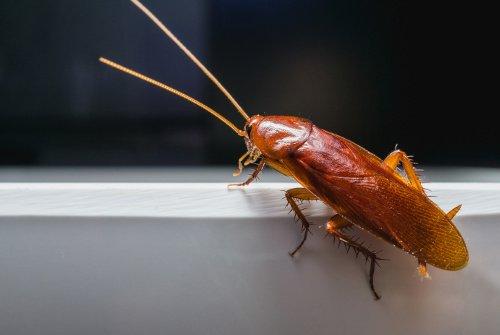 insekt mit rüssel und flügeln