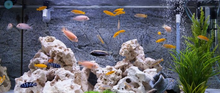 Aquarium So Richten Sie Ihr Aquarium Richtig Ein Das Tierlexikon De