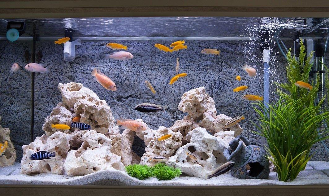fische bilder fotos und steckbriefe zu s und salzwasser fischen. Black Bedroom Furniture Sets. Home Design Ideas