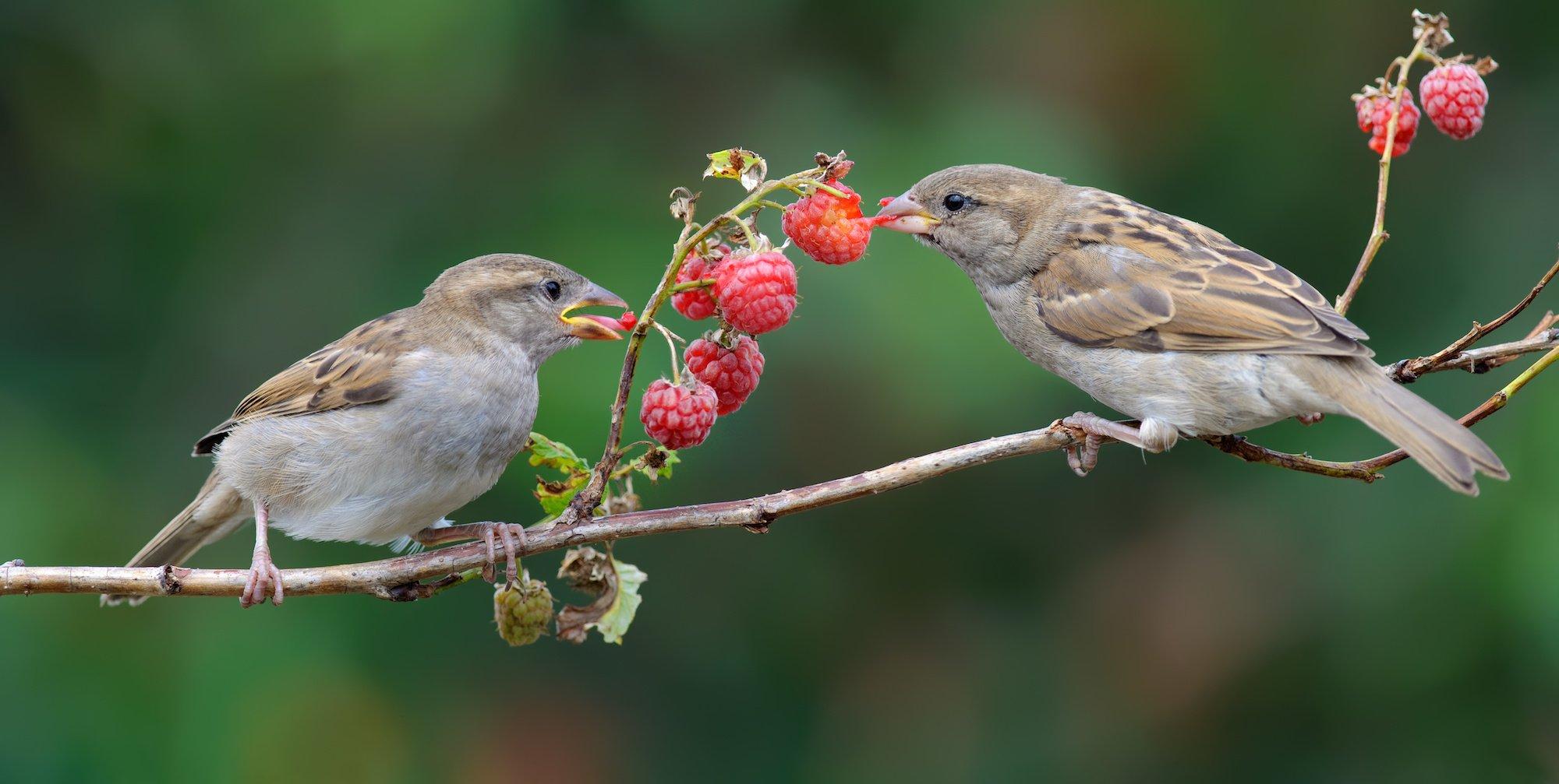 einheimische Vögel