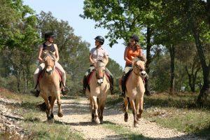 drei reiter auf norweger pferden