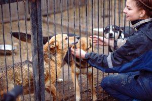 frau streichelt 3 hunde in großem käfig