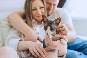 menschliches pärchen auf sofa mit schwarz weißer sphynx-katze in den armen