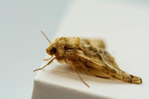 Insekten Fotos Und Informationen Uber Exotische Und Heimische Insekten