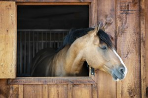 pferd guckt aus stall