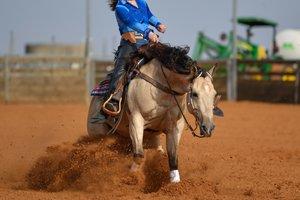 quarter horse mit reiter beim sliding stop