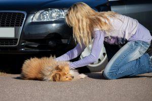 Frau mit verunfalltem Hund vor Auto