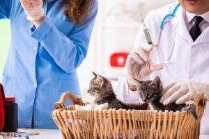 katzenbabys beim impfen