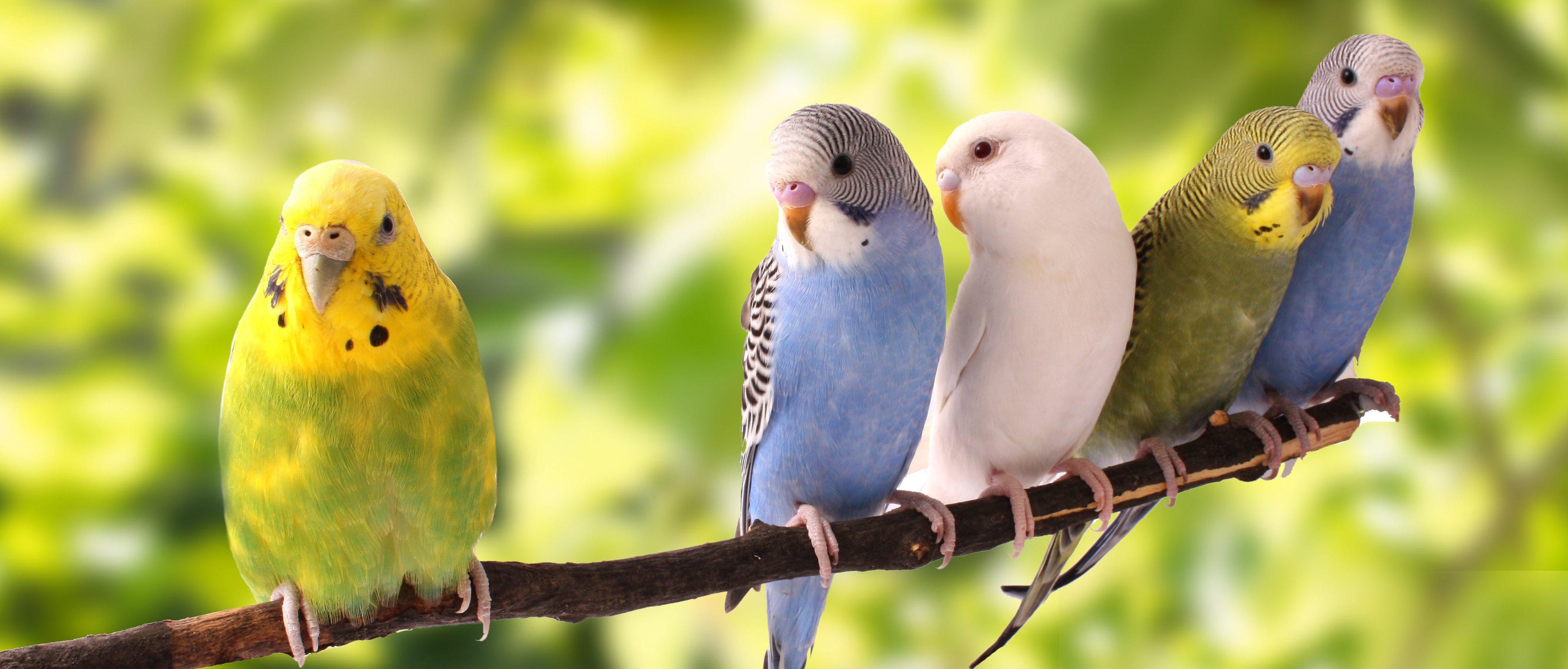 Vogel für zuhause