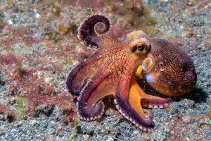 Kraken auf Meeresgrund