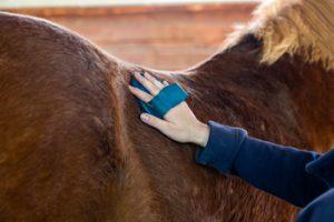Hand putzt Rücken eines Pferdes mit Bürste