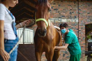 Tierärztin untersucht ein Pferd