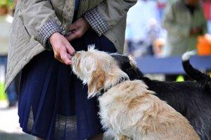 frau füttert älteren hund