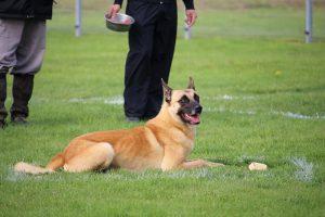 Obedience Hund Ablage