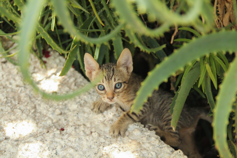 Kätzchen mit Aloe Vera
