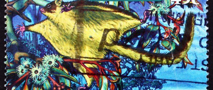 Großer Gleithörnchenbeutler auf Briefmarke