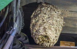 hornissen nest gartenhaus