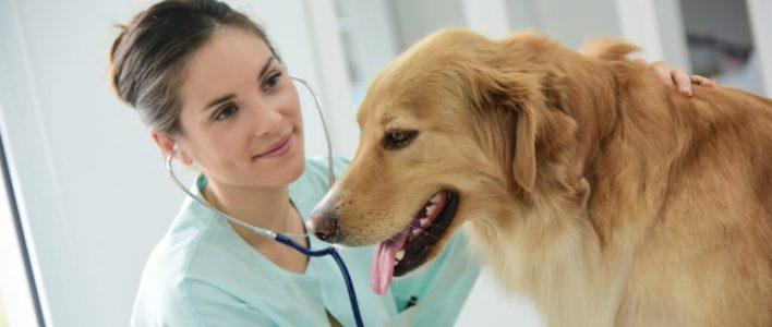 Tierärztin behandelt Hund