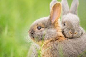 zwei kaninchen kuscheln zusammen