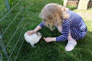 mädchen beim kaninchen füttern in freigehege