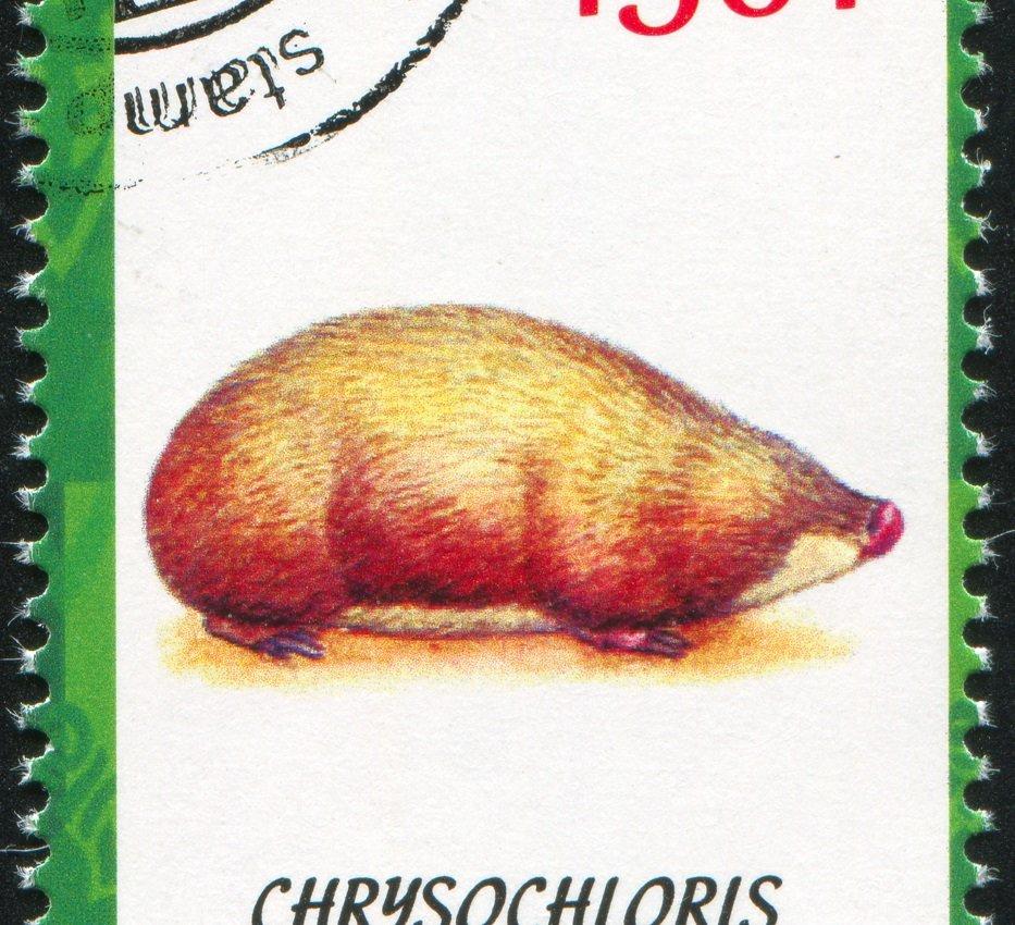 Kap-Goldmull auf Briefmarke