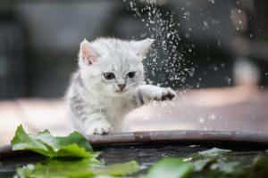 Katze spielt mit wasser