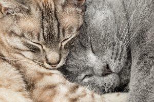 zwei katzen kuscheln zusammen